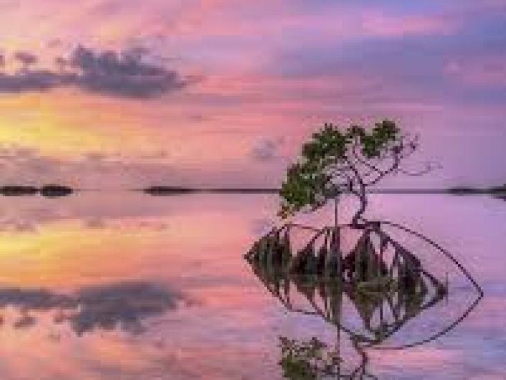 Мускатный орех: польза, вред, народные рецепты