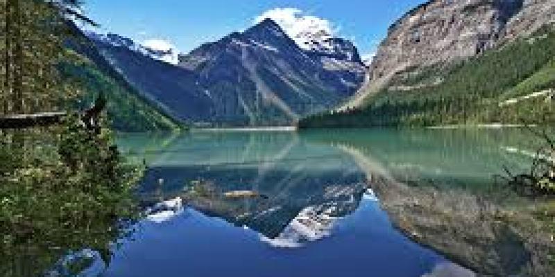 инжир польза для организма, вред, сушеный, фрукт, ягода