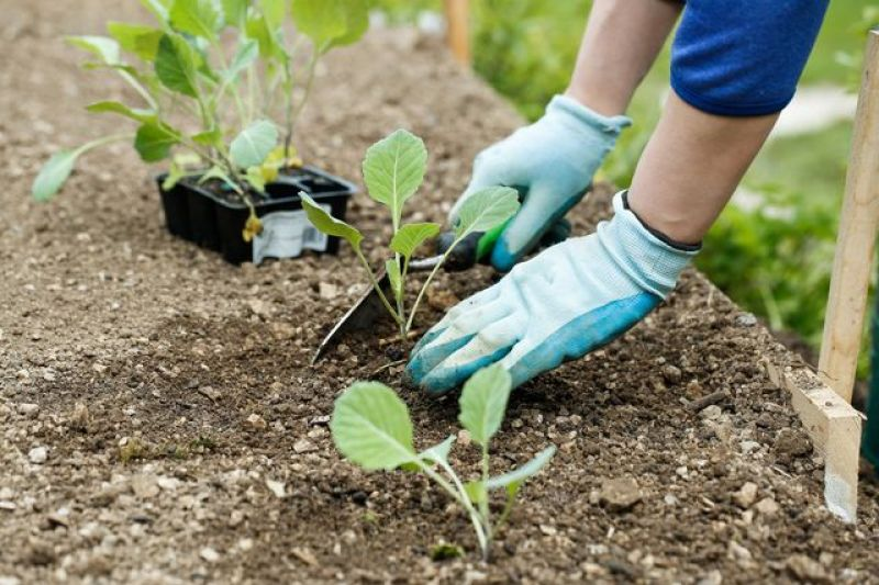 Cold-season vegetables like broccoli and kale should be planted in fall.