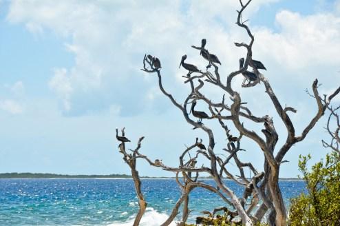 dzika plaża, ptaków śpiew... tralalala