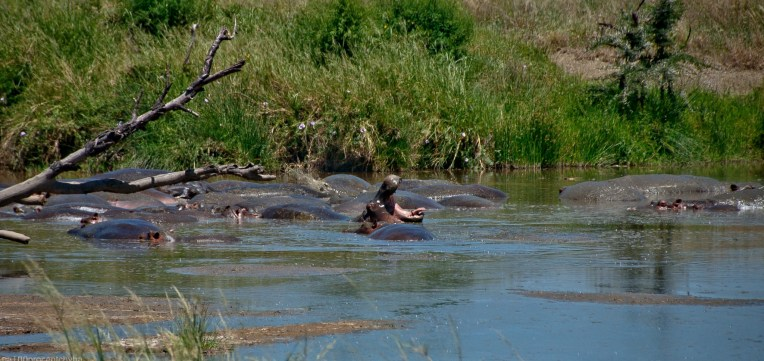 Tanzania-Serengeti_National_Park-016-DSC_5578