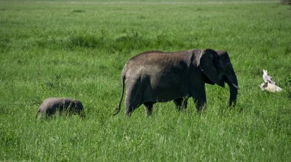 Tanzania-Serengeti_National_Park-051-DSC_5374