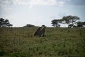 Tanzania-Serengeti_National_Park-052-DSC_5200