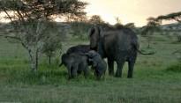 Tanzania-Serengeti_National_Park-053-DSC_5275