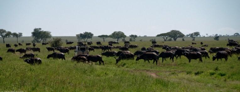 Tanzania-Serengeti_National_Park-067-DSC_5497
