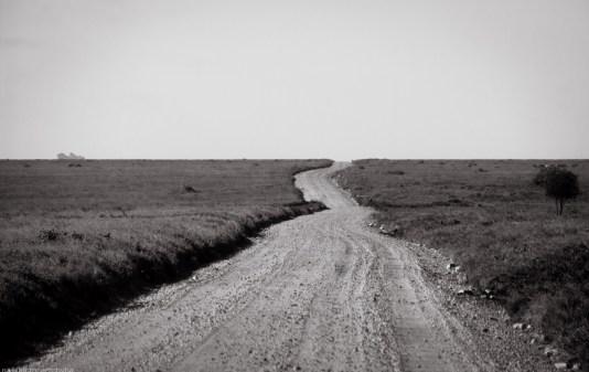 Tanzania-Serengeti_National_Park-081-DSC_5234