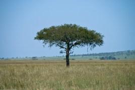 Tanzania-Serengeti_National_Park-097-DSC_5566