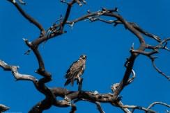 Tanzania-Serengeti_National_Park-117-DSC_5830