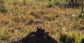 Tanzania-Serengeti_National_Park-137-DSC_5864