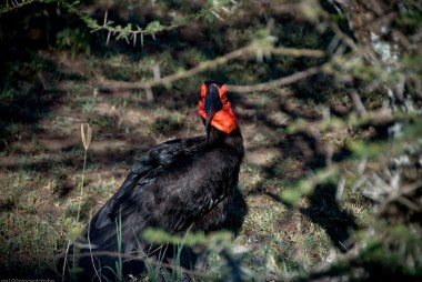 Tanzania-Serengeti_National_Park-143-DSC_5851
