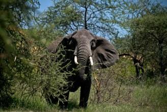 Tanzania-Serengeti_National_Park-156-DSC_5615