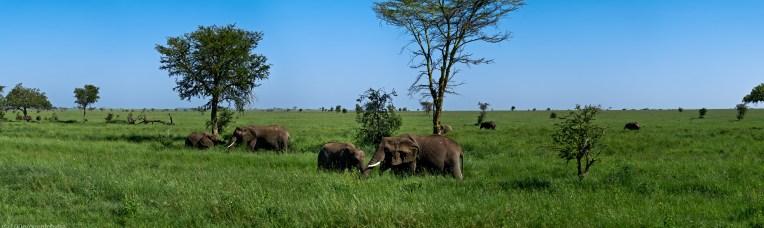 Tanzania-Serengeti_National_Park_2014_[Panorama]-DSC_5381_DSC_5392-12_images