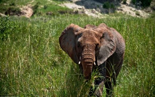 Tanzania-Tarangire_National_Park-016-DSC_6213