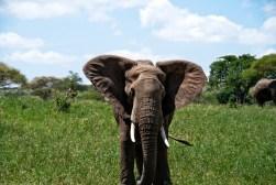 Tanzania-Tarangire_National_Park-027-DSC_6212