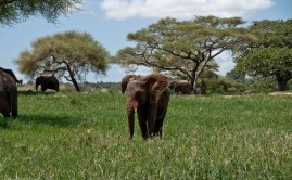 Tanzania-Tarangire_National_Park-034-DSC_6219