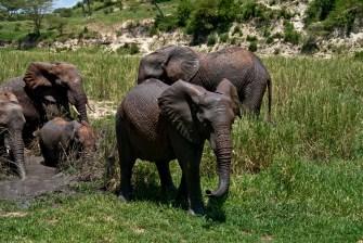 Tanzania-Tarangire_National_Park-039-DSC_6242