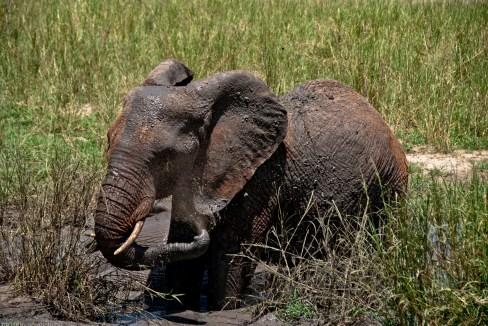 Tanzania-Tarangire_National_Park-042-DSC_6238