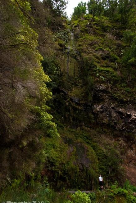 2016-02-08-13-Madeira-DSC_2097