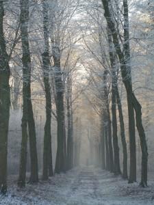 Hoge Bomen foto Sanne Roemen