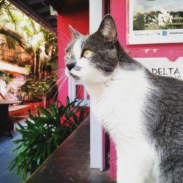 gato-bonitaipanema