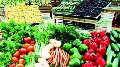 """Photo of """"الزراعة"""": ارتفاع صادرات مصر الزراعية إلى 5.4 مليون طن"""