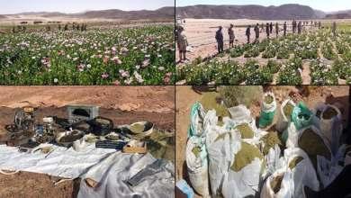 Photo of القوات المسلحة بالتعاون مع وزارة الداخلية تنظم حملة مكثفة للقضاء على الزراعات المخدرة بشبه جزيرة سيناء