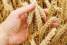 Photo of الفاو : مصر تدير قطاع الحبوب بكفاءة للحفاظ على الأمن الغذائى