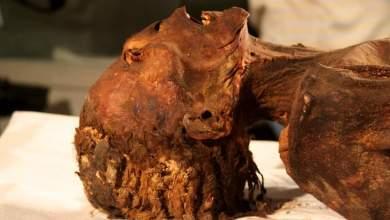 Photo of زاهي حواس: الأشعة المقطعية تكشف مومياء المرأة الصارخة لأميرة مصرية ماتت بنوبة قلبية منذ ٣٠٠٠ عام