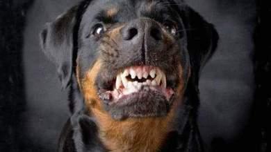 Photo of مصرع الطفلة سما 5 سنوات فوق عقار بعد هجوم كلب عليها بكفر الزيات