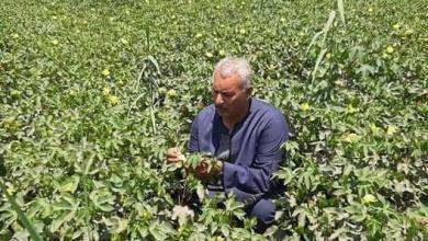 Photo of نقيب الفلاحين: يكشف اسباب تراجع زراعة القطن