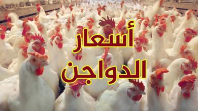 Photo of أسعار الدواجن اليوم  في مصر
