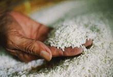 Photo of العراق: مشتريات الأرز بلغت 260 ألف طن في موسم 2020-2021