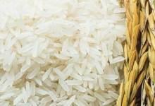 Photo of غرفة صناعة الحبوب: توريد الدفعة الثانية من الأرز المحلي للتموين الإثنين
