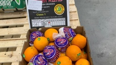 Photo of وزيرة التجارة تعلن نجاح تصدير أولى شحنات البرتقال المصري للبرازيل