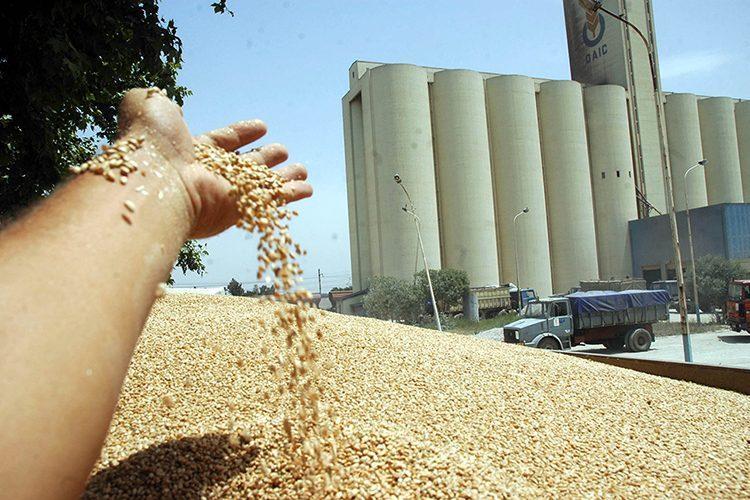 أسعار السلع لن ترتفع ولدينا مخزون القمح يكفي لـ4 أشهر قادمة..تفاصيل