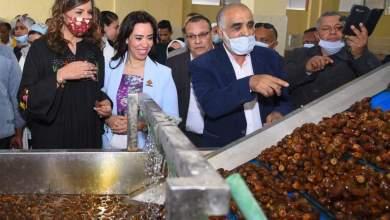 Photo of وزيرة الهجرة: مزارع ومصانع التمور توفر فرص عمل آمنة للشباب المصري