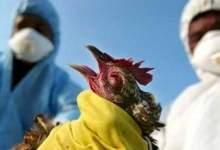 Photo of اكتشاف بؤرة لإنفلونزا الطيور في المنوفية.
