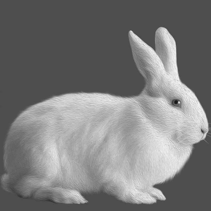 white.Rabbit (day 01), NFT / Print series, naccarato, 2021