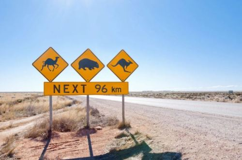 outback road with signs of camel, wombat, kangaroo & text 'nest 96 km'