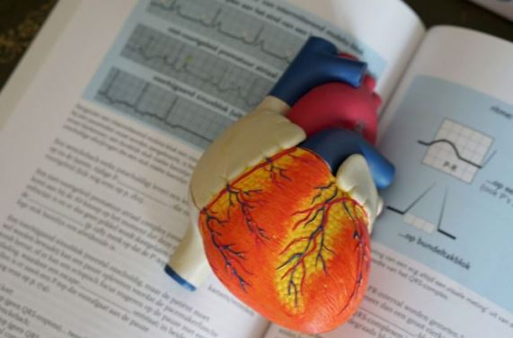plastic model of heart sitting on medical text book