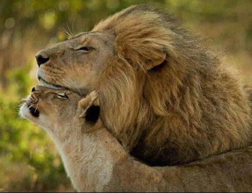 leon-encuentro