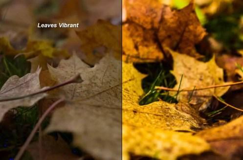 Leaves Vibrant