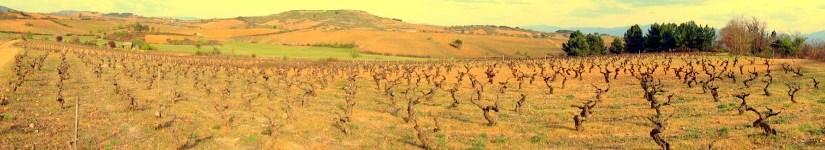 Viteri Winery – El Vino se Escribe con Renglones Torcidos.