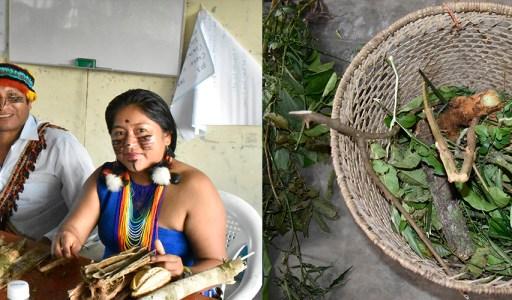 GTANW relanza la valoración y aplicación de sus conocimientos milenarios de medicina natural tradicional