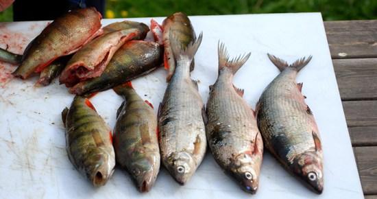 Fiskrensning
