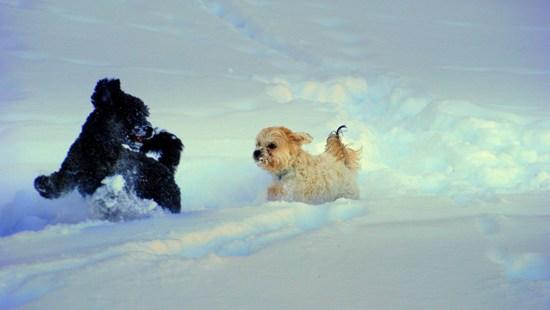 Hundar kul på isen 550