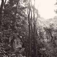 Cee's Black & White Challenge: Trees