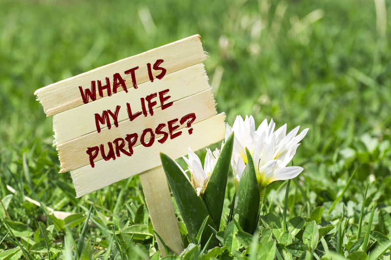 What's my life purpose?