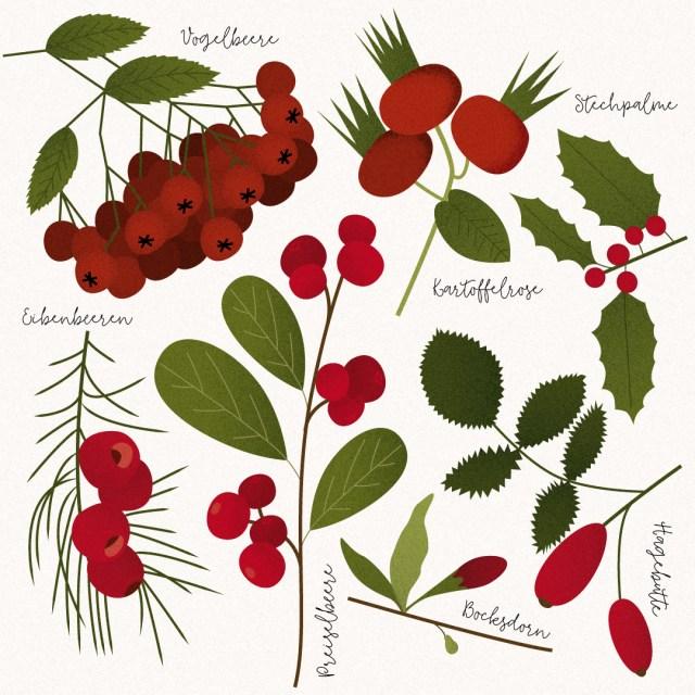 Grafik-Rote-Beeren