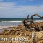 Holz am Fishermans Beach